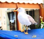 Seagul sittpinne att få pommesfrites för lunch arkivfoton