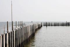 Seagul sul mare Immagine Stock