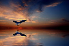 Seagul at sunset Royalty Free Stock Images