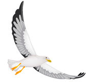 Seagul. Vector illustration of a Seagul Royalty Free Stock Photography