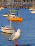 Seagul y barcos de vela Imágenes de archivo libres de regalías