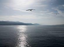 seagull που πετά πέρα από την αδριατική θάλασσα στο ηλιοβασίλεμα στοκ φωτογραφία με δικαίωμα ελεύθερης χρήσης