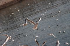 Seagull προσγειώνεται στοκ εικόνες με δικαίωμα ελεύθερης χρήσης