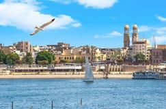 Seagull över Nilen i Luxor fotografering för bildbyråer
