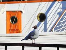 Seagull żeglowania ptasi pobliski statek fotografia royalty free