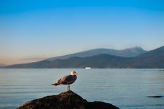 Seagull ένας βράχος σε ανοικτό στο Βανκούβερ στοκ εικόνες
