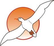 seagull ήλιος Στοκ φωτογραφίες με δικαίωμα ελεύθερης χρήσης