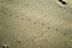 Seagull ίχνη στην άμμο Στοκ Φωτογραφία