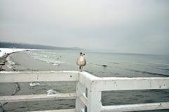 seagull αποβαθρών συνεδρίαση στοκ εικόνες