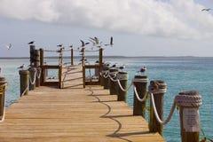 seagull αποβαθρών Στοκ εικόνες με δικαίωμα ελεύθερης χρήσης