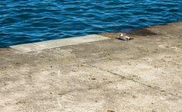 Seagull από την ακτή στοκ εικόνες