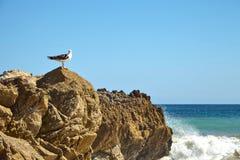 seagull βράχου φύσης ανασκόπησης seascape ουρανός συνεδρίασης Στοκ Εικόνα