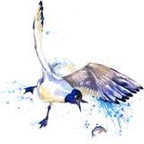 Seagull γραφική παράσταση μπλουζών seagull απεικόνιση με το κατασκευασμένο υπόβαθρο watercolor παφλασμών ασυνήθιστο watercolor απ ελεύθερη απεικόνιση δικαιώματος