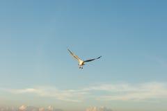 Seagull επεκτείνει τα φτερά στον ουρανό Στοκ φωτογραφία με δικαίωμα ελεύθερης χρήσης