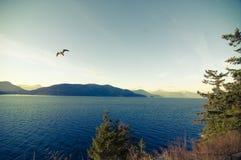 Seagull ελευθερία Στοκ εικόνες με δικαίωμα ελεύθερης χρήσης
