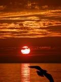 Seagull, ηλιοβασίλεμα, θάλασσα στοκ εικόνα