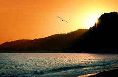 seagull ηλιοβασίλεμα στοκ φωτογραφίες με δικαίωμα ελεύθερης χρήσης