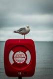 Seagull η ακτοφυλακή Στοκ Εικόνες