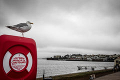 Seagull η ακτοφυλακή Στοκ Φωτογραφία