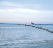 seagull θάλασσας Στοκ Εικόνες