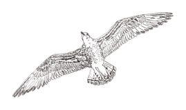 Seagull διάνυσμα Στοκ Φωτογραφίες
