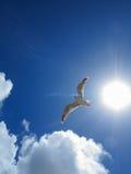 Seagull κάτω από το φωτεινό ήλιο Στοκ Φωτογραφία