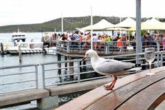 Seagull και ένα γυαλί κρασιού Στοκ Εικόνες