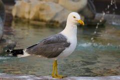 Seagull και η πηγή Στοκ εικόνα με δικαίωμα ελεύθερης χρήσης