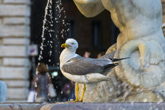 Seagull και η πηγή Στοκ φωτογραφίες με δικαίωμα ελεύθερης χρήσης
