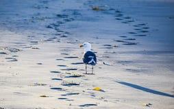 Seagull και η σκιά του Στοκ Φωτογραφίες