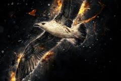 Seagull κατά την πτήση Καλλιτεχνική επίδραση μανίας grunge Στοκ φωτογραφίες με δικαίωμα ελεύθερης χρήσης