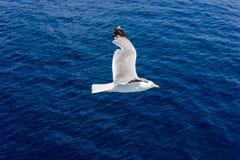 Seagull κατά την πτήση Στοκ φωτογραφία με δικαίωμα ελεύθερης χρήσης