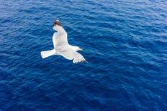 Seagull κατά την πτήση Στοκ Φωτογραφίες