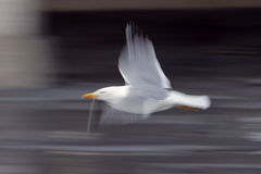 seagull κινήσεων Στοκ εικόνες με δικαίωμα ελεύθερης χρήσης