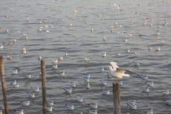Seagull κινηματογράφηση σε πρώτο πλάνο Στοκ εικόνες με δικαίωμα ελεύθερης χρήσης