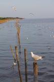Seagull κινηματογράφηση σε πρώτο πλάνο Στοκ εικόνα με δικαίωμα ελεύθερης χρήσης