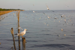 Seagull κινηματογράφηση σε πρώτο πλάνο Στοκ φωτογραφίες με δικαίωμα ελεύθερης χρήσης