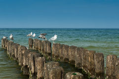 Seagull κοιτάζει Στοκ Εικόνες