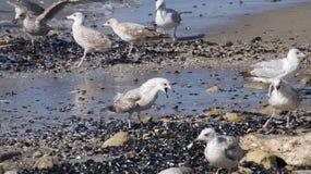 Seagull κραυγές Στοκ εικόνα με δικαίωμα ελεύθερης χρήσης