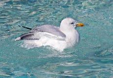 seagull λουτρών Στοκ Εικόνες