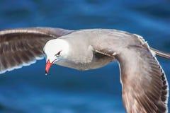 Seagull μετά από τη βάρκα πέρα από το νερό στοκ εικόνα