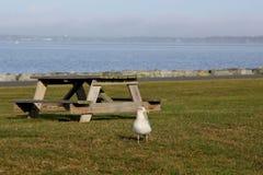 Seagull με έναν πάγκο πικ-νίκ Στοκ Εικόνες