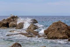 Seagull με τα κύματα Στοκ Εικόνες