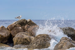 Seagull με τα κύματα Στοκ εικόνα με δικαίωμα ελεύθερης χρήσης