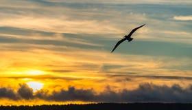 Seagull με το ζωηρόχρωμο ουρανό στοκ εικόνες