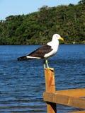 Seagull μια ηλιόλουστη ημέρα Στοκ φωτογραφία με δικαίωμα ελεύθερης χρήσης
