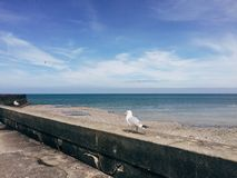 Seagull μπροστά από τον ωκεανό Στοκ εικόνα με δικαίωμα ελεύθερης χρήσης