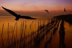 seagull μυγών Στοκ Φωτογραφία