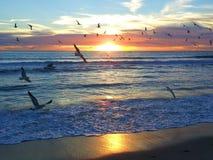 Seagull μύγα Στοκ εικόνα με δικαίωμα ελεύθερης χρήσης