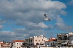 Seagull μύγες πέρα από την πόλη Στοκ εικόνα με δικαίωμα ελεύθερης χρήσης